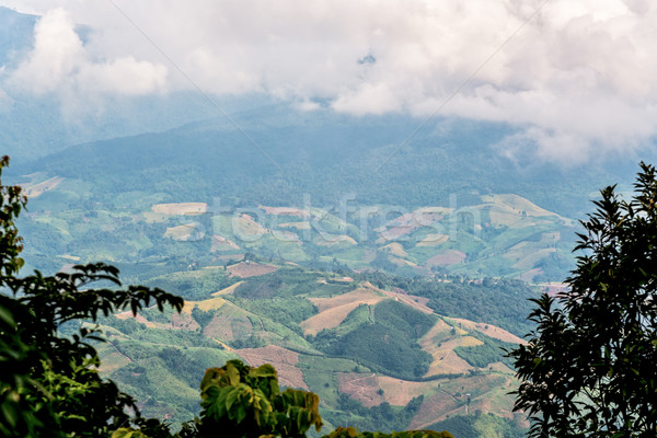 High view cultivated land Stock photo © Yongkiet