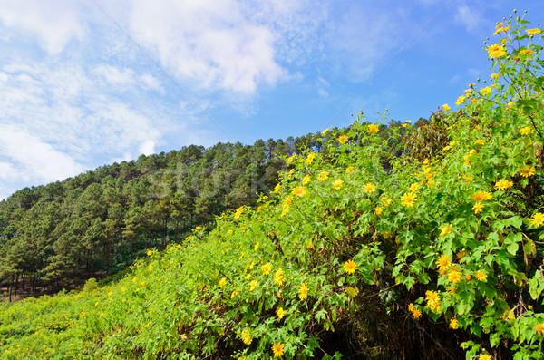 Scenic nature Doi Mae Uko mountain Stock photo © Yongkiet
