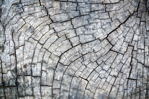 Madeira velha textura preto e branco ao ar livre árvore fundo Foto stock © Yongkiet