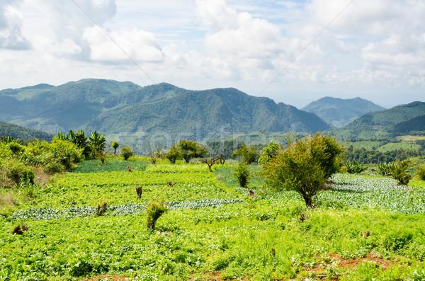 сельского хозяйства плато Фермеры Таиланд небе Сток-фото © Yongkiet