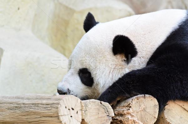 Panda спальный кровать счастливо путешествия Сток-фото © Yongkiet