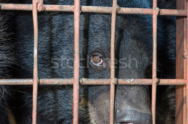 Asiatic black bear are in cage Stock photo © Yongkiet
