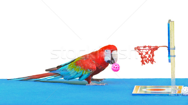 Macaw playing basketball ball toy isolated on white Stock photo © Yongkiet