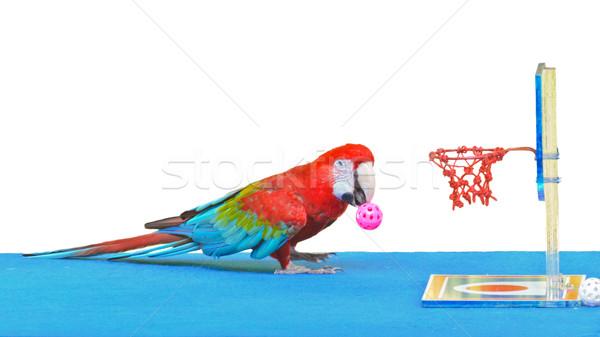 Foto stock: Jogar · basquetebol · bola · brinquedo · isolado · branco