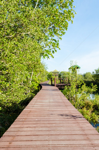 Wood bridge in mangroves Stock photo © Yongkiet