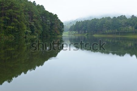 Nature landscape at dawn of lakes and pine forests Stock photo © Yongkiet