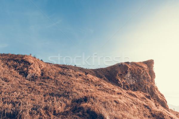 Berg kleur twee vintage stijl mooie Stockfoto © Yongkiet