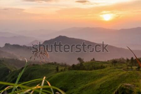 Sunset on Phu Chi Fa Forest Park Stock photo © Yongkiet