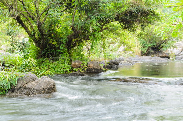 森林 小 滝 熱帯 自然 美 ストックフォト © Yongkiet