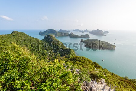 Ver correia belo natureza paisagem Foto stock © Yongkiet