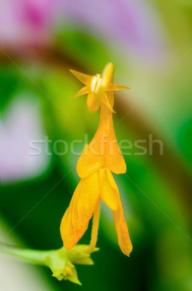 çiçek leylak rengi dans kız sarı çiçek Stok fotoğraf © Yongkiet