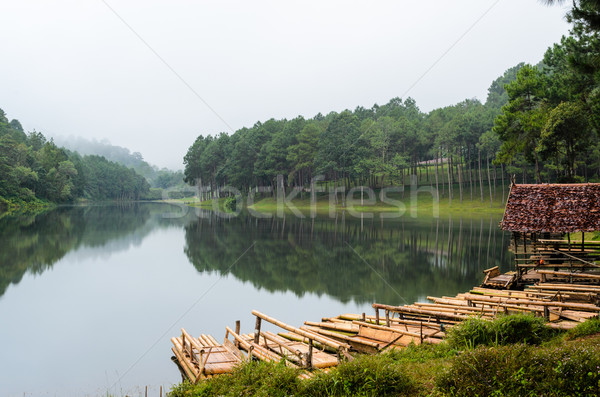 Raft bamboo lake and pine forest at morning Stock photo © Yongkiet