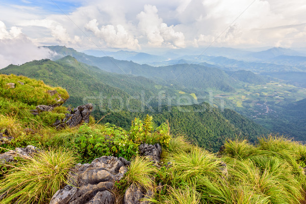 Beautiful landscape at Phu Chi Fa Forest Park Stock photo © Yongkiet