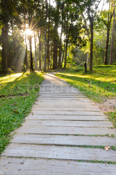 Pathways in tropical forests morning Stock photo © Yongkiet