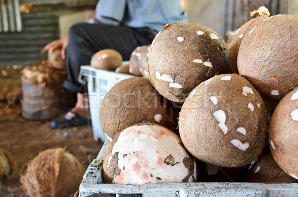 Coconut processing agricultural produce. Stock photo © Yongkiet