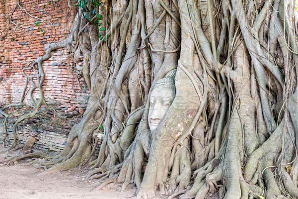 Fej Buddha szobor gyökerek fa alkatrészek Stock fotó © Yongkiet