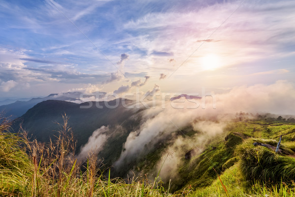 Sunset on Phu Chi Fa Forest Park, Thailand Stock photo © Yongkiet