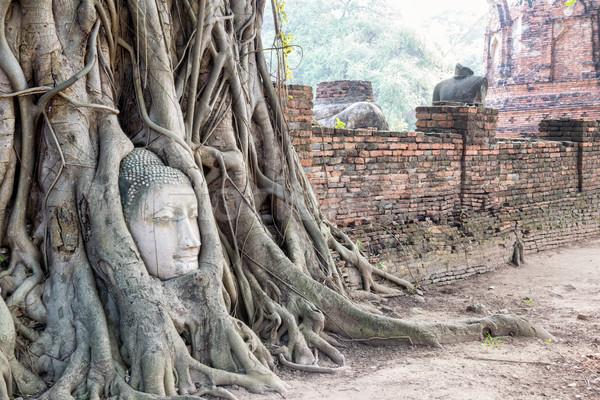 Głowie Buddy posąg korzenie drzewo Zdjęcia stock © Yongkiet