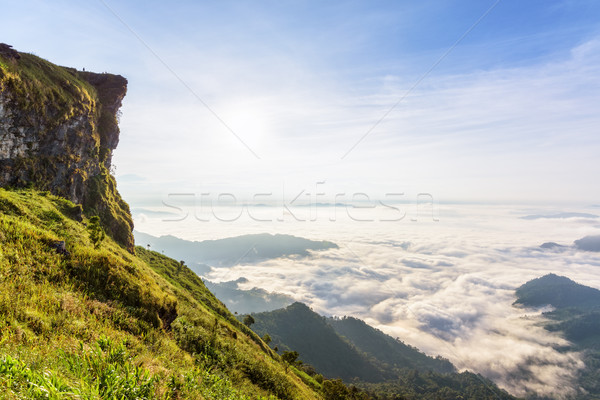 Morning in Phu Chi Fa Forest Park, Thailand Stock photo © Yongkiet