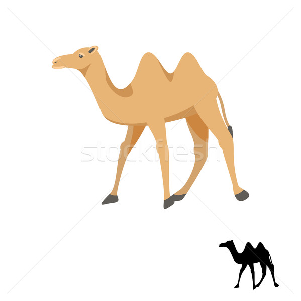 Camello silueta blanco aislado desierto animales Foto stock © yopixart