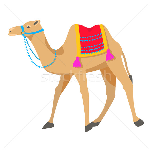 Camel cartoon vector illustration on white. Stock photo © yopixart