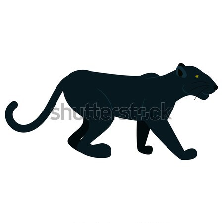 Black panther wild animal isolated on white. Stock photo © yopixart