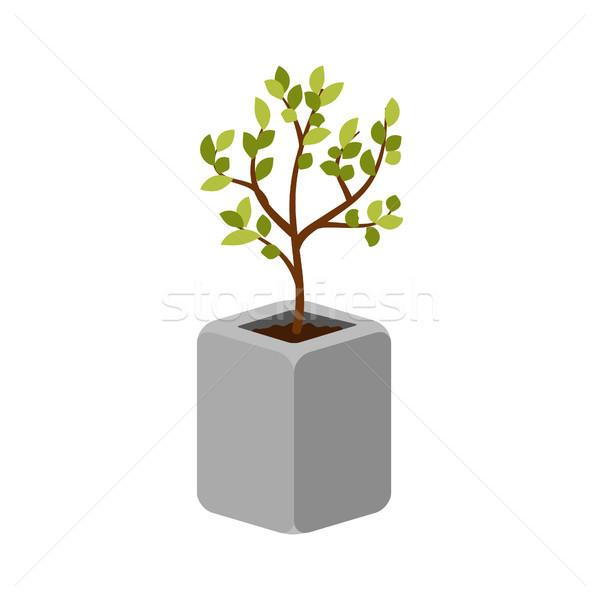 Tree outdoor plant in a concrete pot vector isolated. Stock photo © yopixart
