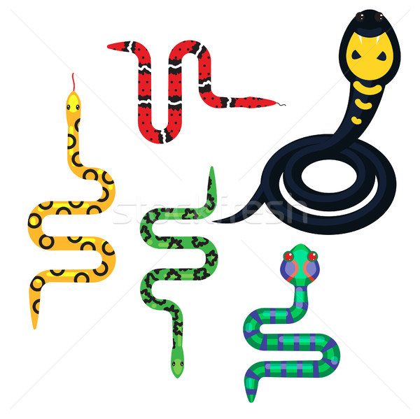 Snake cartoon vector set illustration on white. Stock photo © yopixart