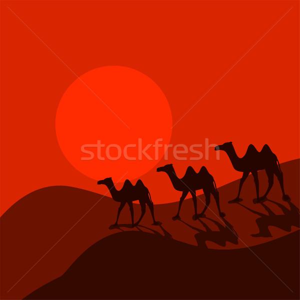 Teve karaván sivatag rajz vektor állat Stock fotó © yopixart