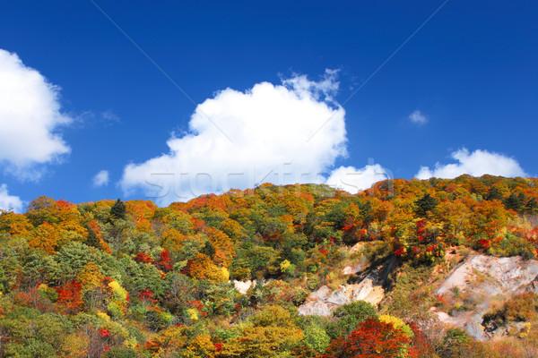 Outono floresta blue sky árvore laranja verde Foto stock © yoshiyayo