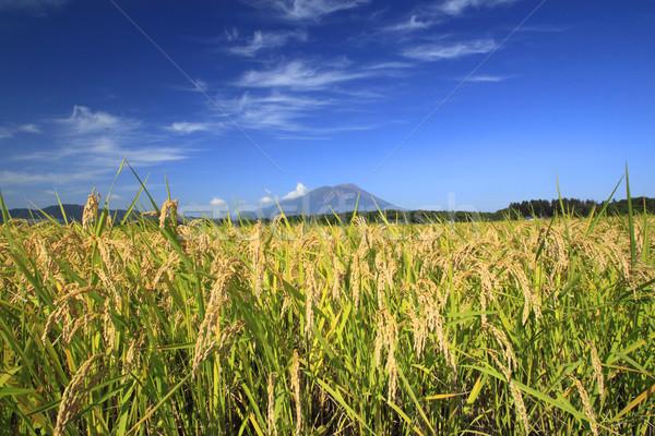 Mt.Iwate and Landscape of rice field Stock photo © yoshiyayo
