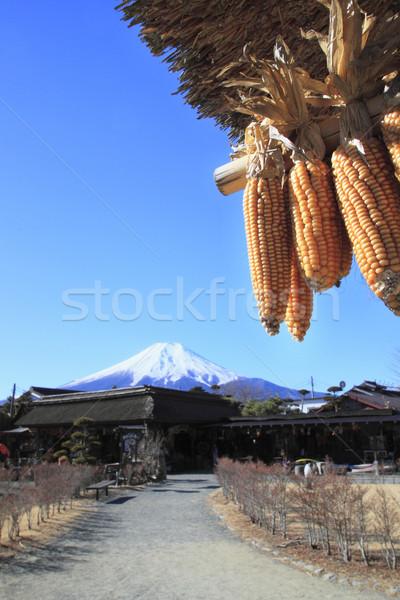 Amarelo milho blue sky folha fazenda branco Foto stock © yoshiyayo
