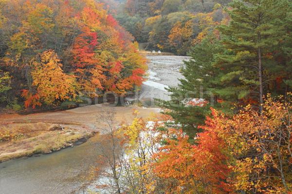 colorful  leaves and Mt.Iwate Stock photo © yoshiyayo