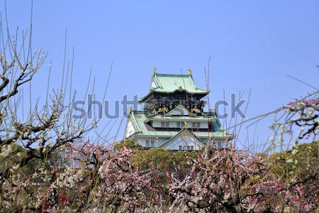 Oszaka kastély szilva virágok tavasz évszak Stock fotó © yoshiyayo