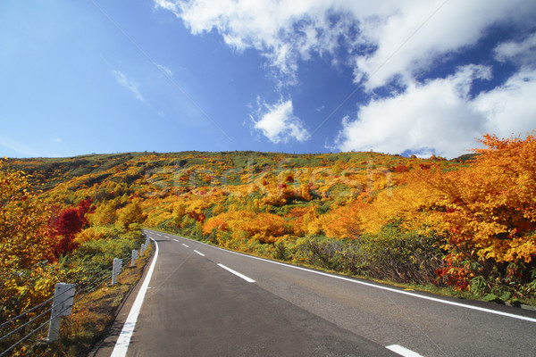 road and colorful  leaves in Hachimantai Stock photo © yoshiyayo