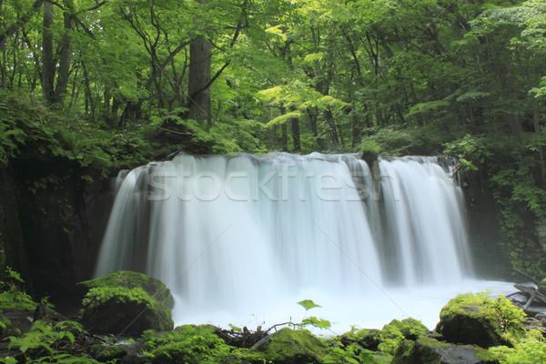 Córrego verão árvore verde cachoeira poder Foto stock © yoshiyayo