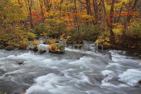 Autumn Colors of Oirase River Stock photo © yoshiyayo