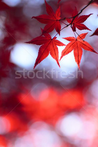 Colorido folhas natureza fundo laranja Foto stock © yoshiyayo