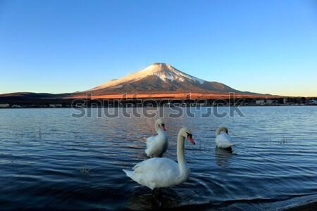 Kuğu göl doğa manzara mavi seyahat Stok fotoğraf © yoshiyayo