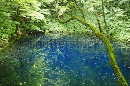Shirakami-Sanchi(world heritage) Stock photo © yoshiyayo