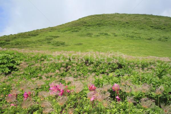 Céu flor grama paisagem azul Foto stock © yoshiyayo