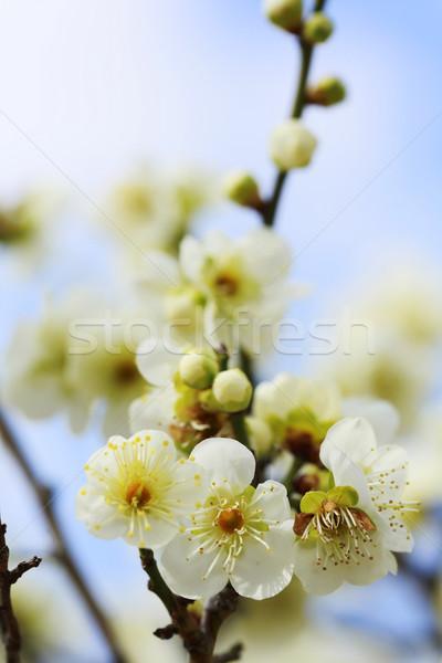 Japonês Osaka Japão céu árvore azul Foto stock © yoshiyayo