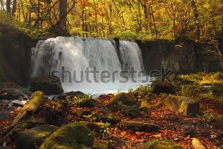 Outono cores rio natureza paisagem folha Foto stock © yoshiyayo