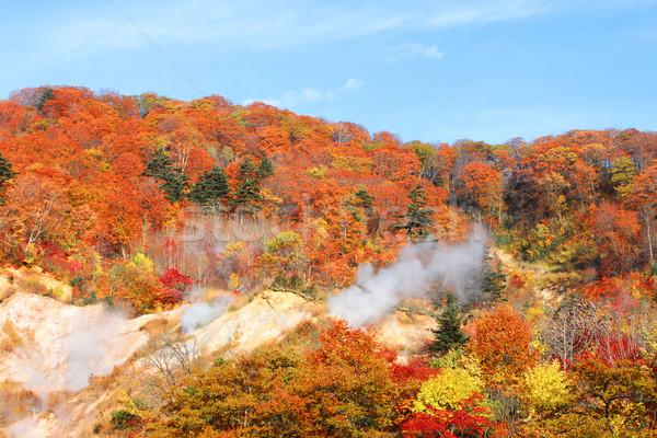 autumn forest  against blue sky Stock photo © yoshiyayo