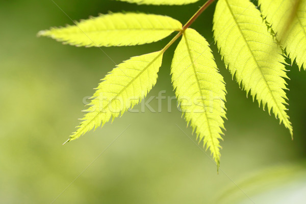 Stock photo: fresh green and blue sky