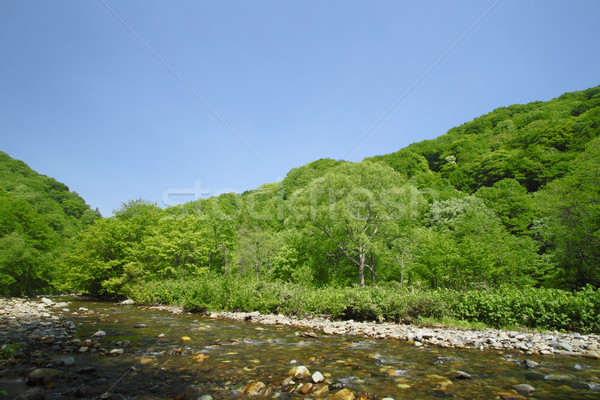 Mundo herança árvore floresta natureza luz Foto stock © yoshiyayo