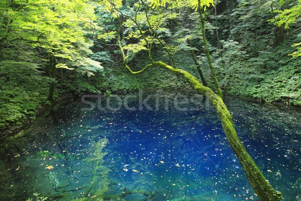 Herança árvore natureza azul lago planta Foto stock © yoshiyayo