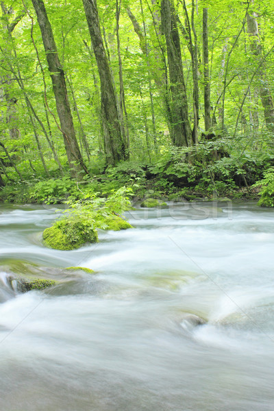 Stock photo: Oirase stream in summer