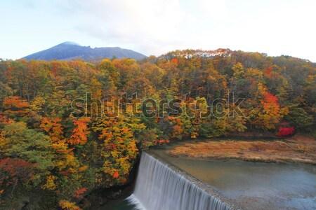 Colorido folhas madeira montanha cor planta Foto stock © yoshiyayo
