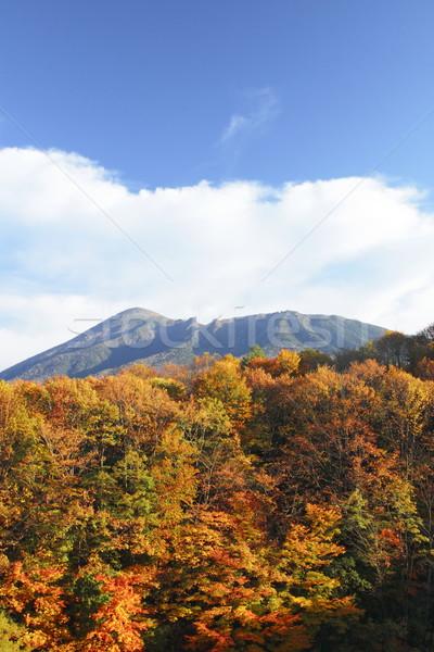 Colorido folhas madeira montanha nuvem cor Foto stock © yoshiyayo